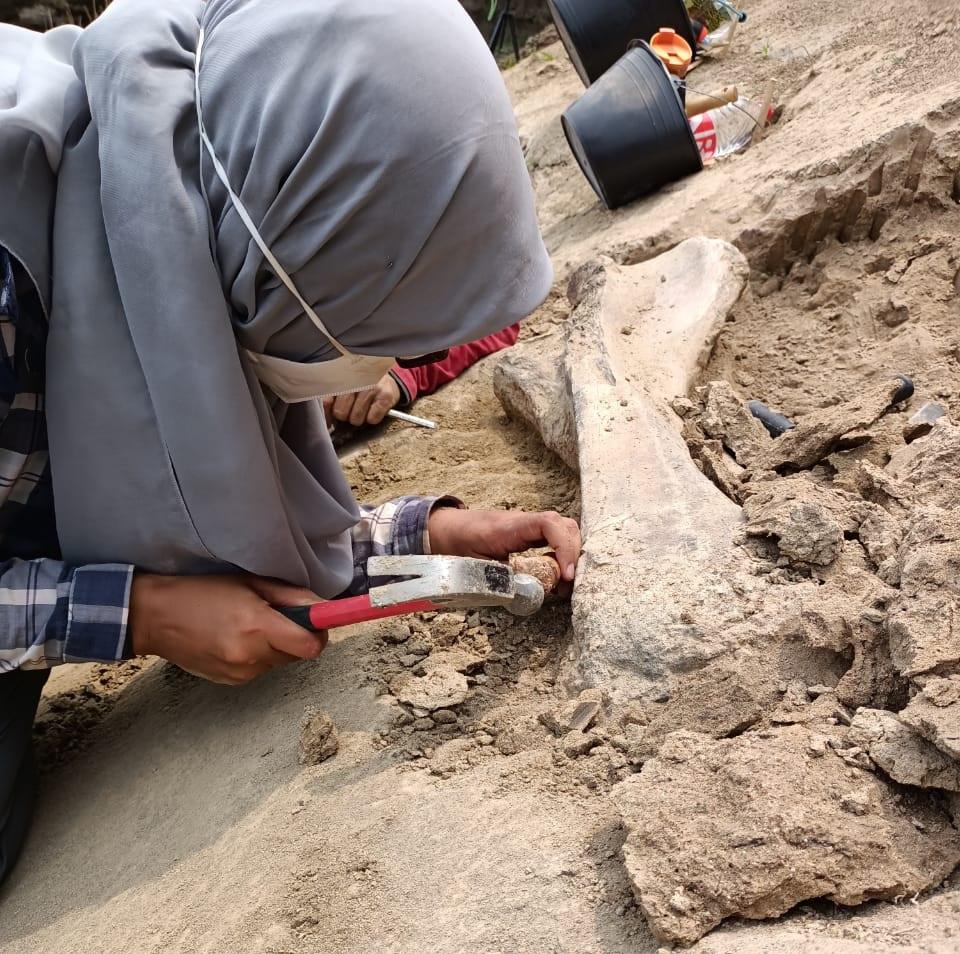 Teliti Fosil di Waduk Saguling, Tim FITB Temukan Fakta Keberadaan Hewan Purba